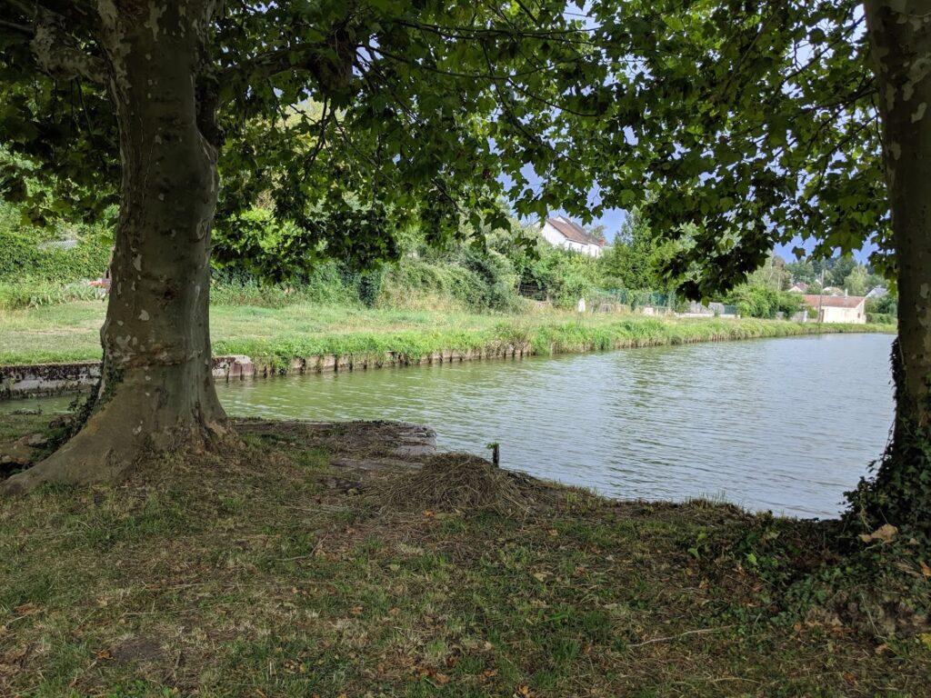 arbres et fleuve